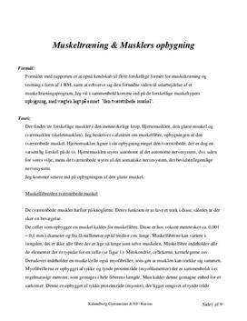 Musklers opbygning & muskeltræning | Rapport